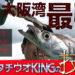 【動画】5代目タチウオキングの技に迫る~大阪湾タチウオキングバトル~vol.3誘いとアワセ